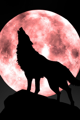 wolf wallpapers. Night of the Wolf Orange